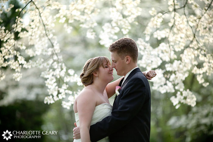 Bride and groom under dogwood tree in Middletown, Maryland