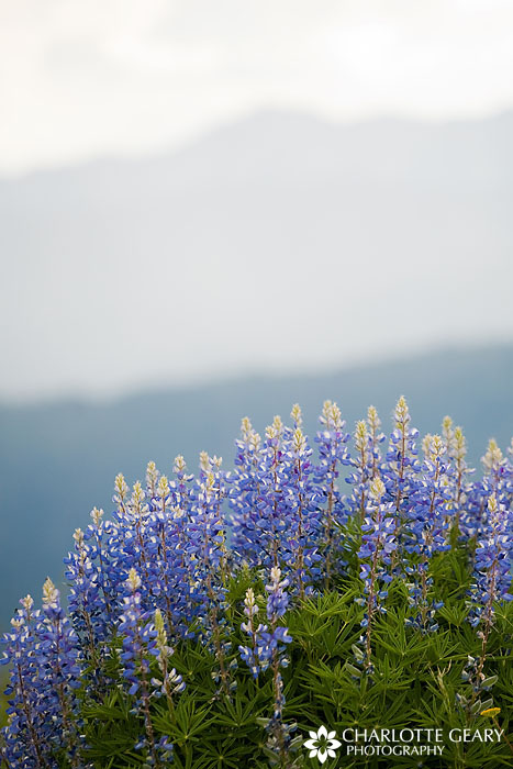 Wildflowers at Missionary Ridge in Durango, Colorado